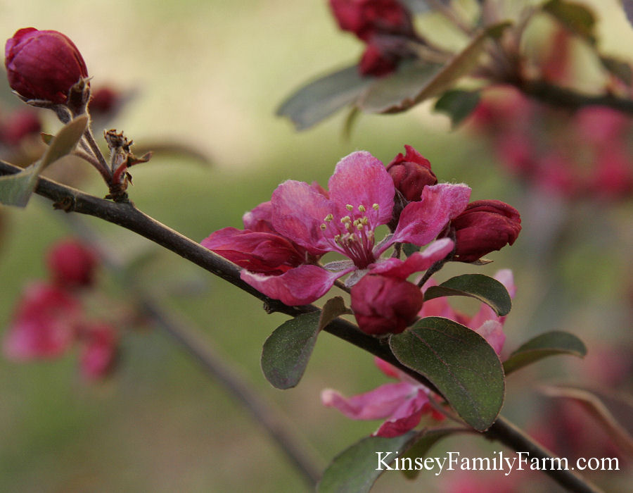 Kinsey Family Farm Trees for Butterfly Pollinator Garden Design
