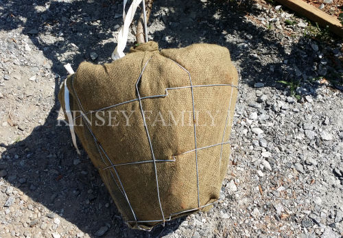 How to Plant Balled and Burlapped Tree Burlap will decompose Kinsey Family Farm