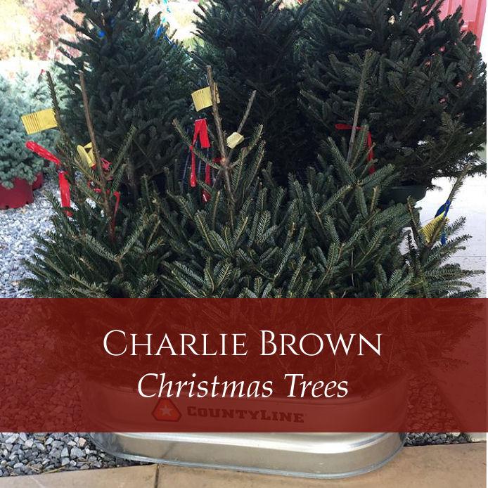 Kinsey Family Farm Charlie Brown Christmas Tree